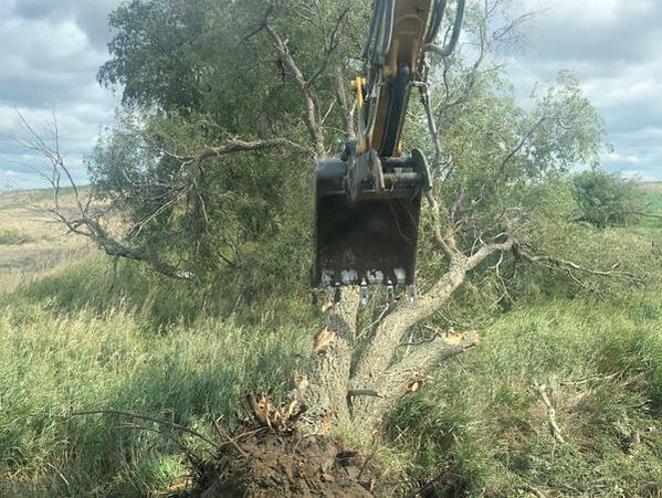 Tree removal and land clearing